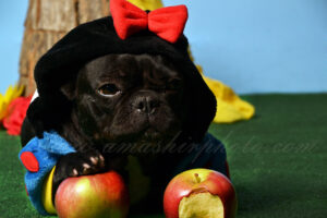 Amashirphoto fotografia mascotas web 1