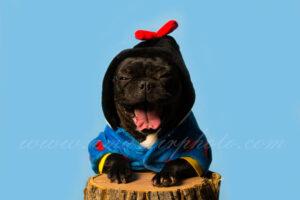 Amashirphoto fotografia mascotas web 3